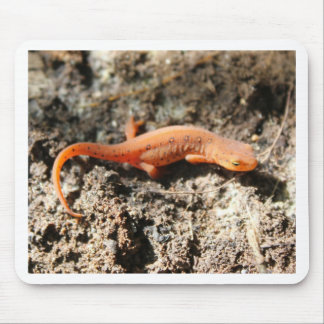Eastern Newt Mouse Pad