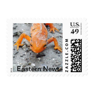 Eastern Newt Postage Stamps