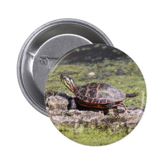 Eastern Painted Turtle 2 Inch Round Button