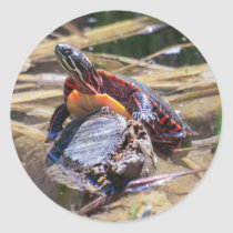 Eastern Painted Turtle Classic Round Sticker