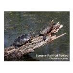 Eastern Painted Turtle Postcards