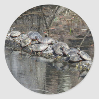 Eastern Painted Turtle Round Stickers