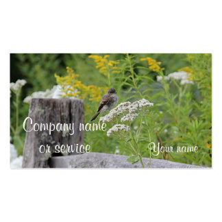 Eastern phoebe in the garden business card