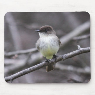Eastern Phoebe Mouse Pad