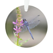 Eastern Pondhawk Ornament