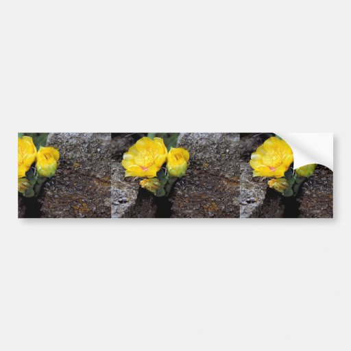 Eastern prickly pear cactus car bumper sticker