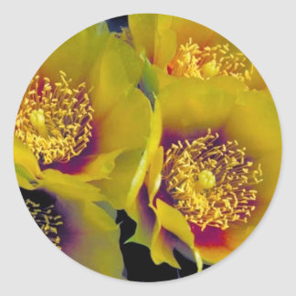 Eastern prickly pear cactus round stickers