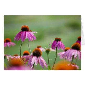 Eastern Purple Coneflowers Card