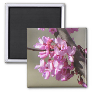 Eastern Redbud Blooms 2 Inch Square Magnet