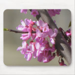 Eastern Redbud Blooms Mouse Mat