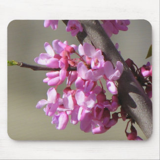 Eastern Redbud Blooms Mouse Pad