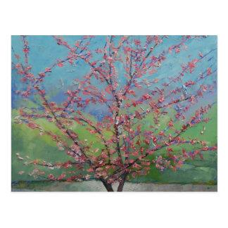 Eastern Redbud Tree Postcard