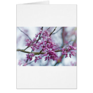 Eastern Redbud Wildflowers - Cercis canadensis Greeting Cards