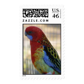 Eastern Rosella Parakeet Postage Stamp