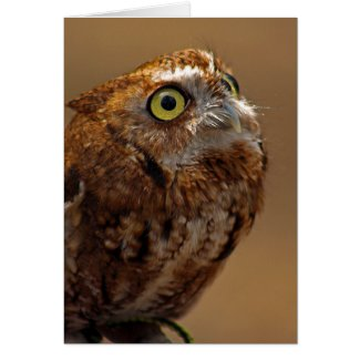 Eastern Screech Owl card