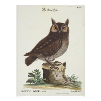Eastern Screech Owl Catesby Seligman Reproduction Print