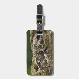 Eastern Screech Owl Gray Phase) Otus asio, Bag Tag