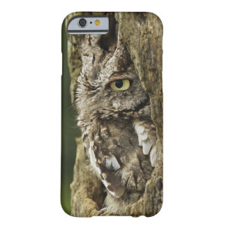 Eastern Screech Owl Gray Phase) Otus asio, Barely There iPhone 6 Case