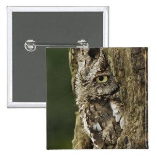 Eastern Screech Owl Gray Phase) Otus asio, Button