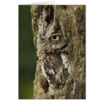 Eastern Screech Owl Gray Phase) Otus asio, Greeting Card