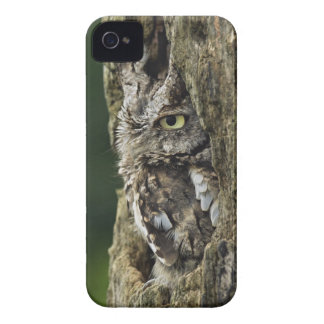 Eastern Screech Owl (Gray Phase) Otus asio iPhone 4 Case-Mate Cases