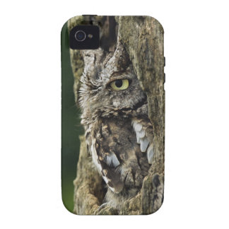 Eastern Screech Owl (Gray Phase) Otus asio iPhone 4/4S Cover