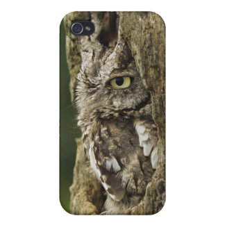 Eastern Screech Owl Gray Phase) Otus asio, Case For iPhone 4