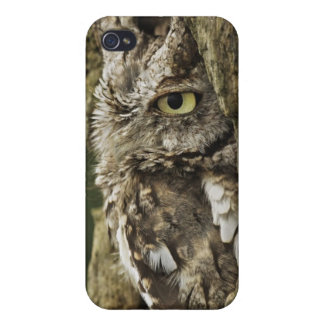 Eastern Screech Owl Gray Phase) Otus asio, Cases For iPhone 4