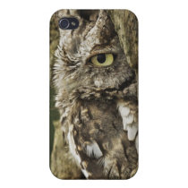 Eastern Screech Owl Gray Phase) Otus asio, Cover For iPhone 4