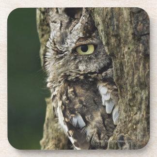 Eastern Screech Owl (Gray Phase) Otus asio Drink Coaster