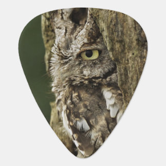 Eastern Screech Owl Gray Phase) Otus asio, Guitar Pick