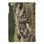Eastern Screech Owl Gray Phase) Otus asio, Cover For The iPad Mini