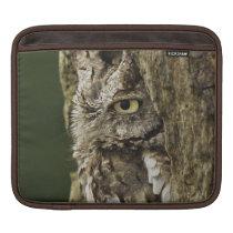 Eastern Screech Owl Gray Phase) Otus asio, iPad Sleeve