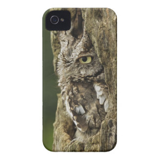Eastern Screech Owl Gray Phase) Otus asio, iPhone 4 Case-Mate Case