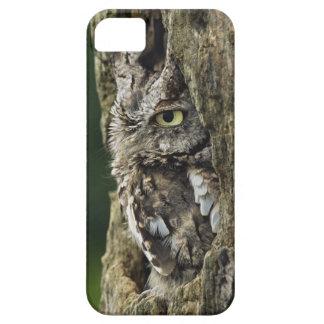 Eastern Screech Owl (Gray Phase) Otus asio iPhone SE/5/5s Case
