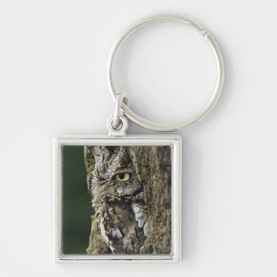 Eastern Screech Owl (Gray Phase) Otus asio Keychain
