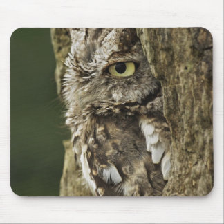 Eastern Screech Owl Gray Phase) Otus asio, Mouse Pad
