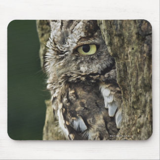 Eastern Screech Owl (Gray Phase) Otus asio Mouse Pad