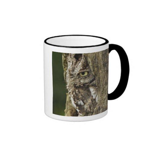 Eastern Screech Owl Gray Phase) Otus asio, Ringer Coffee Mug
