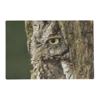 Eastern Screech Owl Gray Phase) Otus asio, Placemat