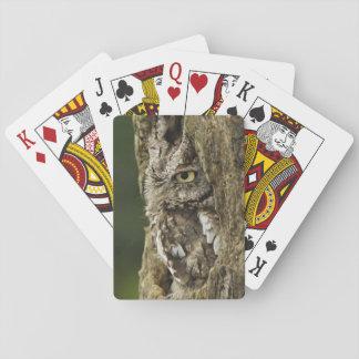 Eastern Screech Owl Gray Phase) Otus asio, Playing Cards