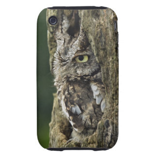 Eastern Screech Owl (Gray Phase) Otus asio Tough iPhone 3 Case