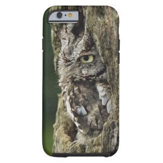 Eastern Screech Owl (Gray Phase) Otus asio Tough iPhone 6 Case