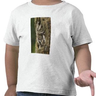 Eastern Screech Owl Gray Phase) Otus asio, Tshirt