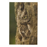 Eastern Screech Owl Gray Phase) Otus asio, Wood Wall Art
