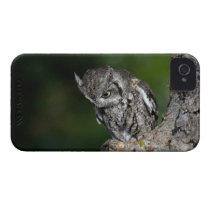 Eastern Screech Owl iPhone 4 case