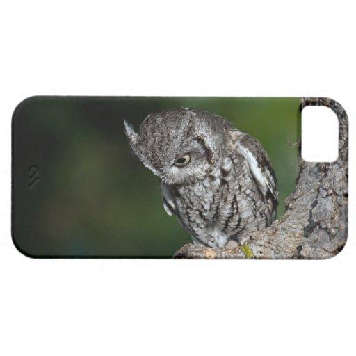 Eastern Screech Owl iPhone 5 case