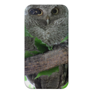 Eastern Screech Owl Covers For iPhone 4