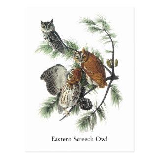 Eastern Screech Owl, John Audubon Post Cards