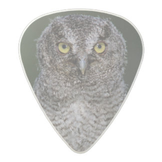 Eastern Screech-Owl, Megascops asio, Otus 2 Acetal Guitar Pick